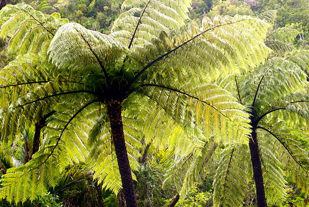 Ponga Tree Fern Canopy, New Zealand Wall Art
