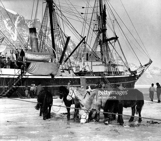 GREENLAND EXPEDITION 1930 Ponies from Iceland which were used as pack horses by Alfred Wegener during his final Greenland expedition November 1930
