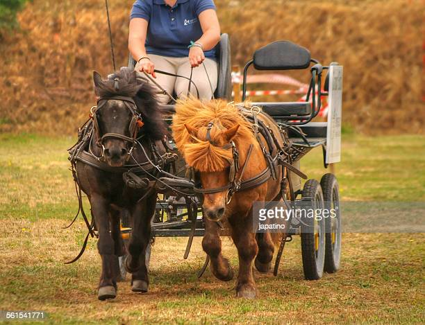 ponies - riding crop stock photos and pictures