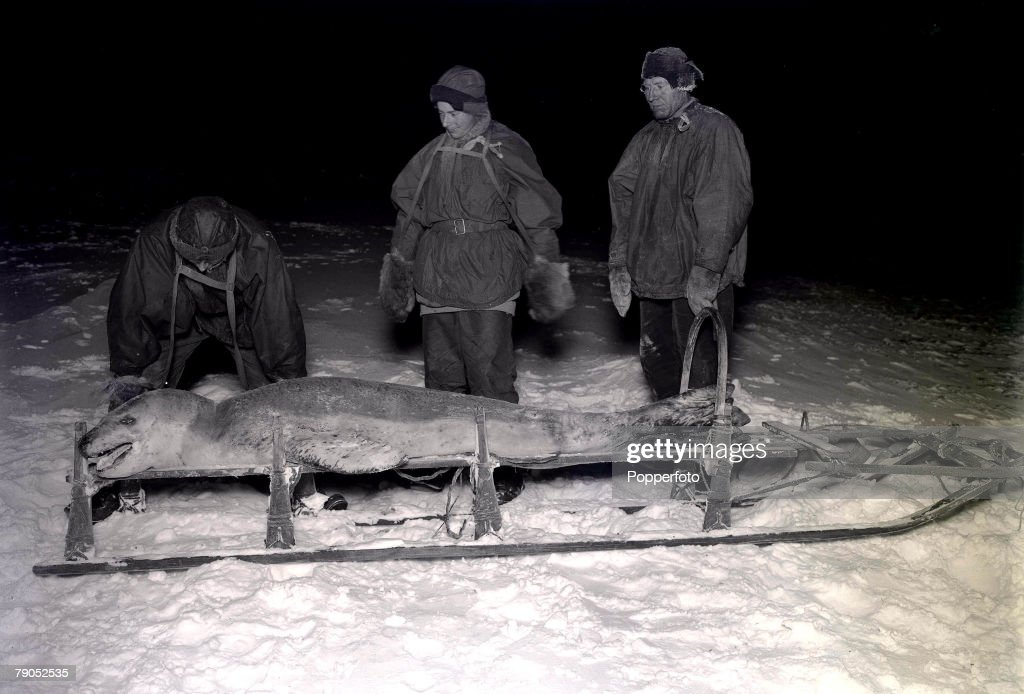 H.G Ponting. Captain Scott+s Antarctic Expedition 1910 - 1912. 28th May, 1911. Expedition team members Dr. Wilson, Cherry-Garrard and Ford with a leopard seal on a sledge. : News Photo