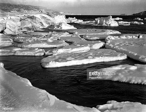 HG Ponting Captain Scott's Antarctic Expedition 1910 1912 6th March Weddell seals basking in the pack ice on the floes off Cape Evans