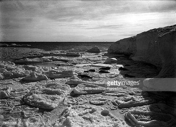 HG Ponting Captain Scotts Antarctic Expedition 1910 1912 7th March Seals basking in a new ice floe off Cape Evans