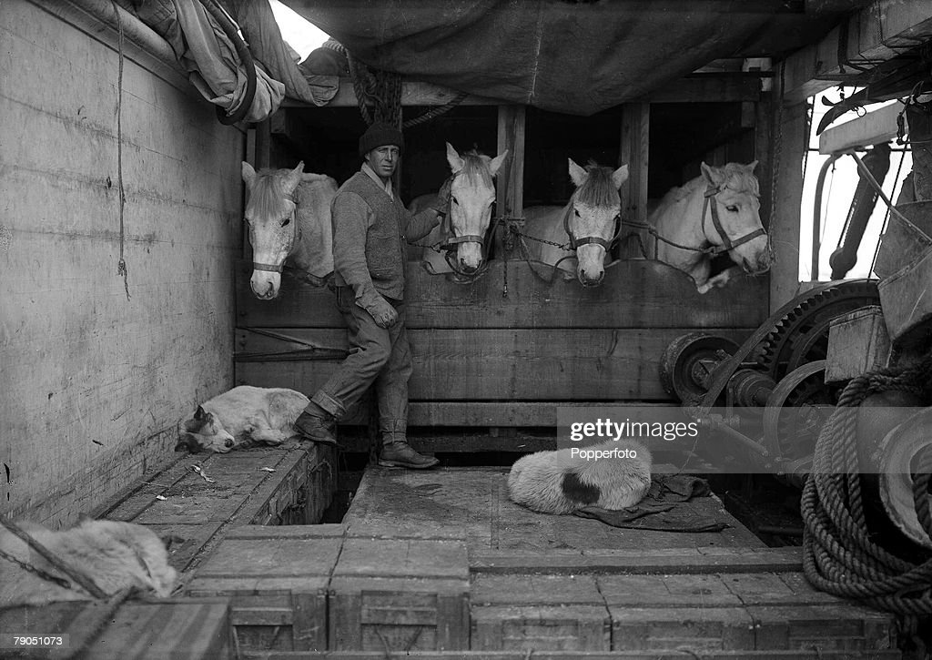 """H.G Ponting. Captain Scott+s Antarctic Expedition 1910 - 1912. December, 1910. Captain Oates with some of the ponies in their stables on board the """"Terra Nova"""" ship. : News Photo"""