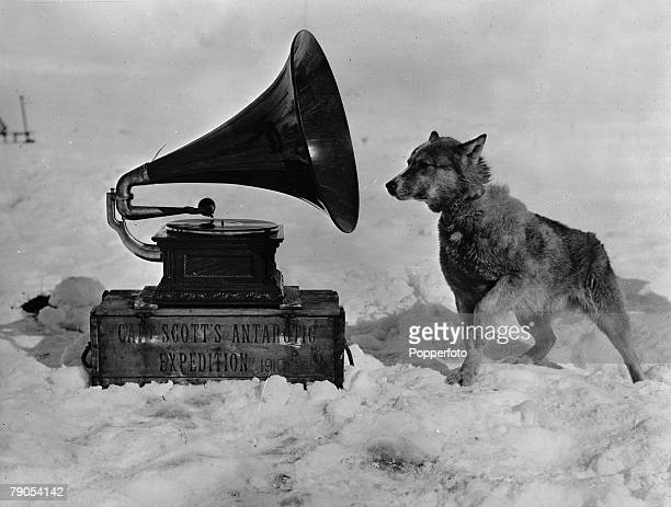 HG Ponting Captain Scotts Antarctic Expedition 1910 1912 Husky sledge Dog Chris listening to music from the Gramophone