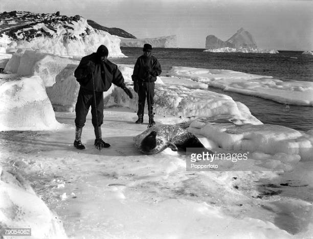 HG Ponting Captain Scotts Antarctic Expedition 1910 1912 March Dimitri Geroff and Hooper looking at a Weddell seal in the ice off Cape Evans