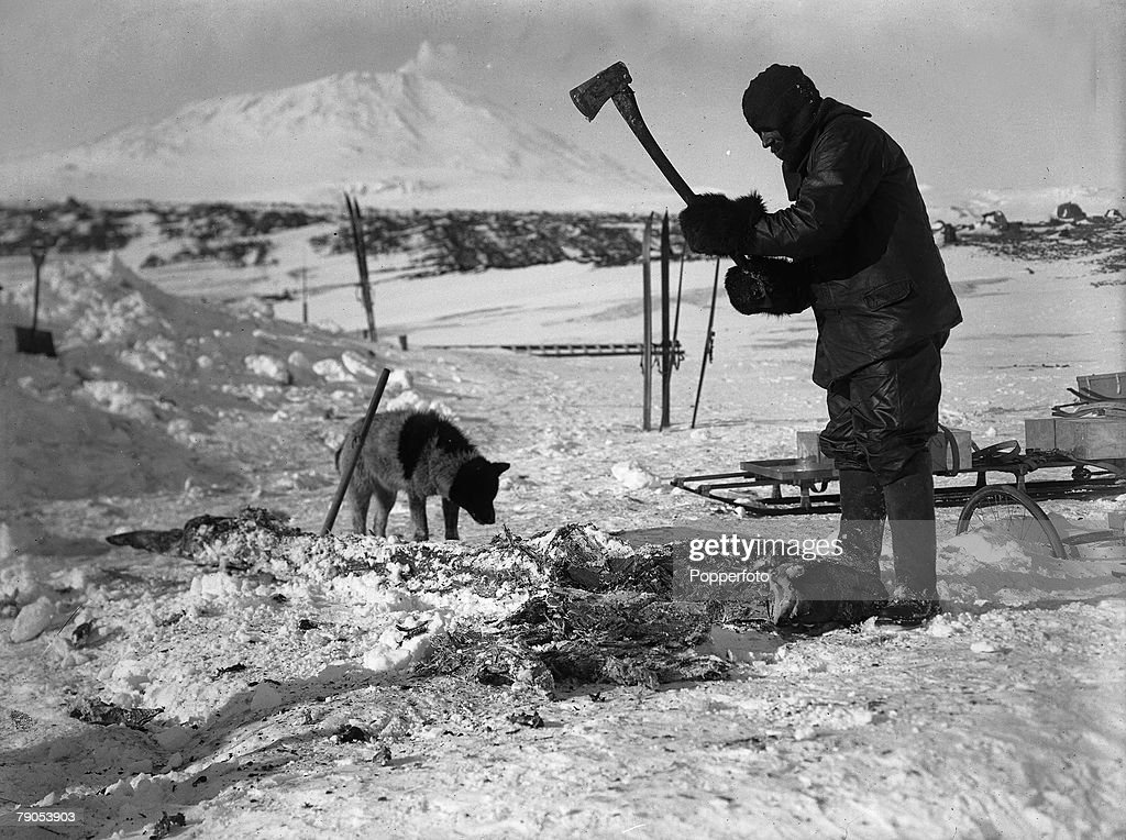 H.G Ponting. Captain Scott+s Antarctic Expedition 1910 - 1912. November, 1911. Cecil Meares cutting up seal meat with an axe for the dogs at feeding time.