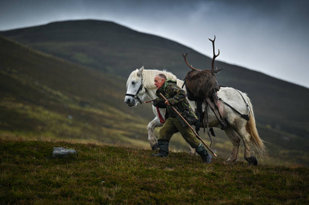 GBR: Stag Stalking In Scotland