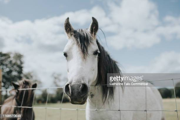 pony - domestic animals stock pictures, royalty-free photos & images