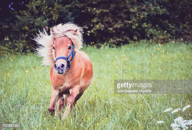 Pony Running On Field
