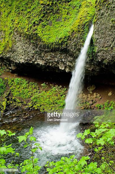 ponytail falls, columbia river gorge, oregon, usa - dan sherwood photography stock pictures, royalty-free photos & images