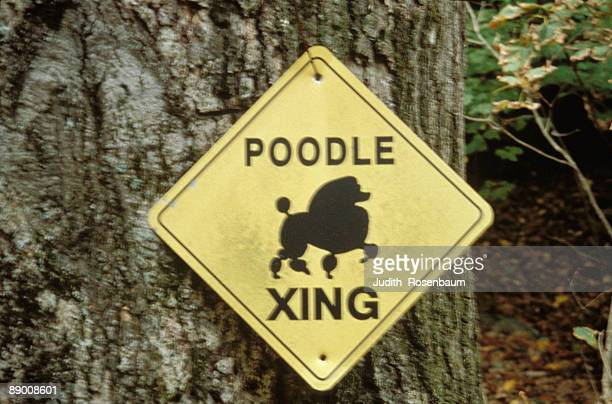 Poodle Crossing sign nailed to tree