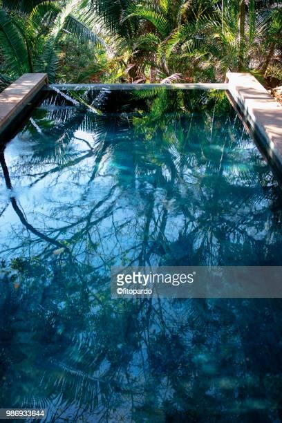pool and a rainforest - poolbillard billard stock-fotos und bilder