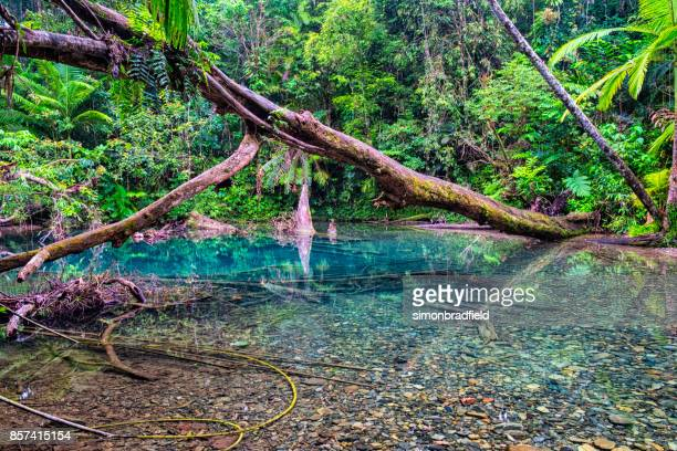 Pool In The Daintree Rainforest National Park