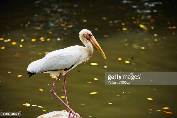 pooping bird - jurong bird park stock pictures, royalty-free photos & images