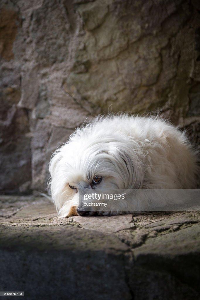 Poor little dog : Stock Photo
