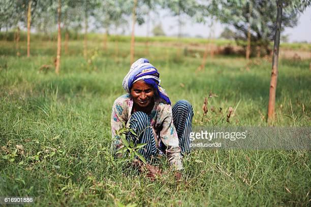 Poor women cutting grass