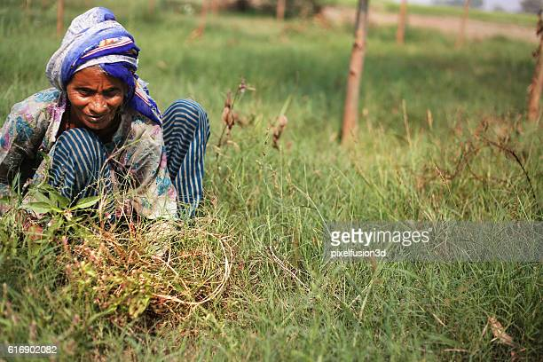 poor women cutting grass - scythe stock photos and pictures