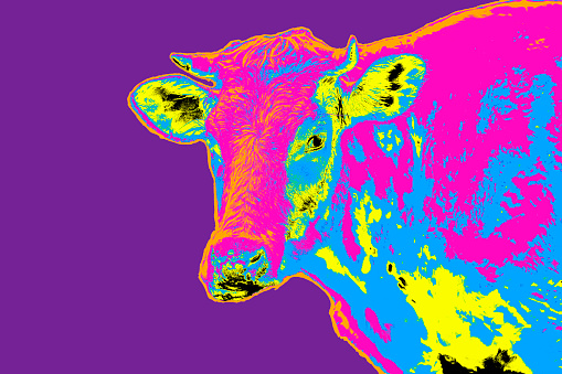 Pop art multicolored cow portrait - gettyimageskorea