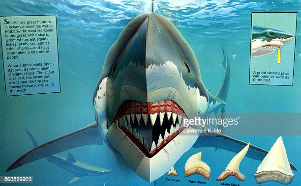 Pop Up book The Shark published by Waldo Hunt, 82 yr. Old expert and publisher of pop up books.