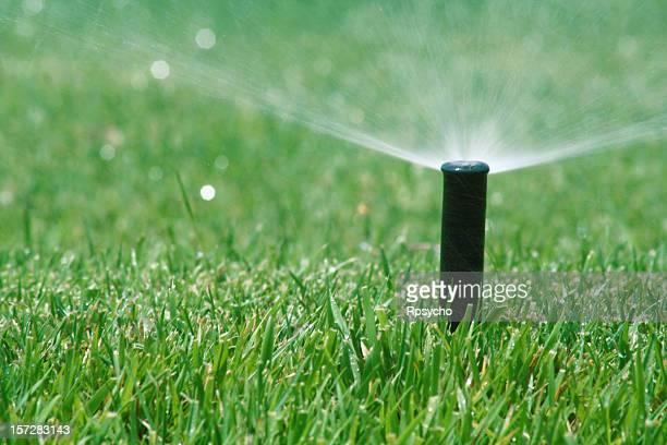 Pop up grass sprinkler over a green lawn