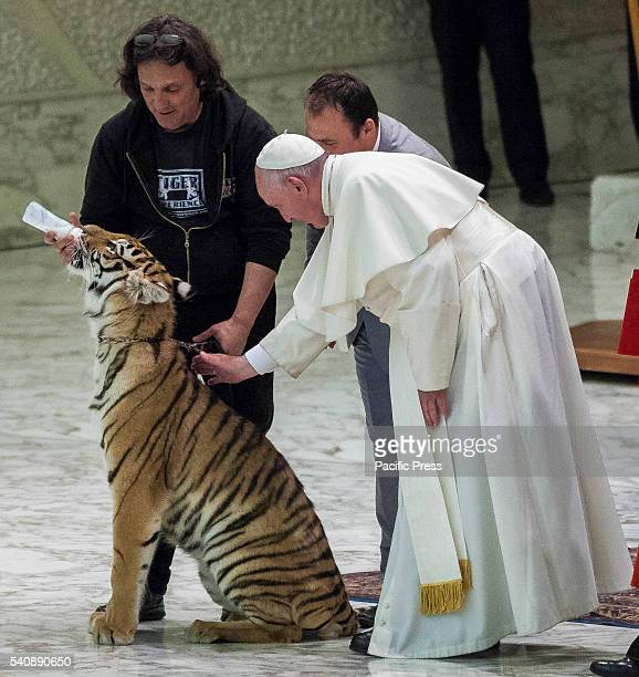 """Pope Francis caresses a young tiger during his audience with the participants in the Jubilee of the """"World of Travelling Shows"""" at Paul VI Hall in..."""