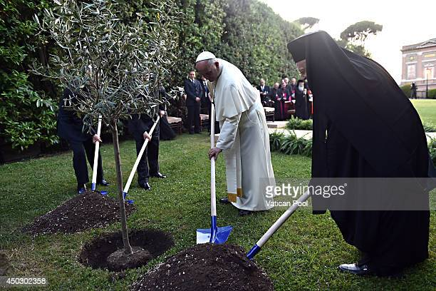 Pope Francis Israeli President Shimon Peres Palestinian President Mahmoud Abbas and Patriarch Bartholomaios I plant an olive tree during a peace...