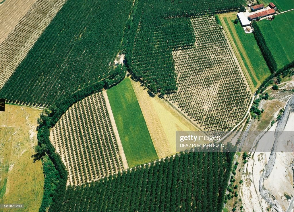 Poplar groves, aerial view, near Saluzzo, Piedmont : News Photo