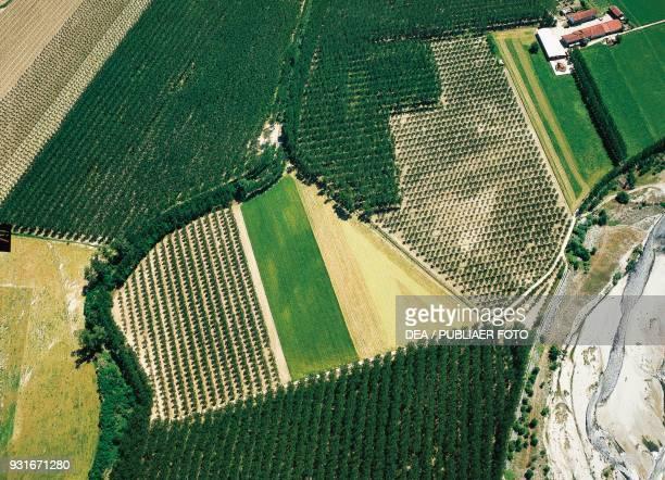 Poplar groves aerial view near Saluzzo Piedmont Italy