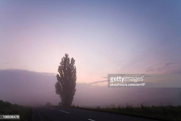 poplar tree by the road at dawn, hokkaido prefecture, japan - plusphoto stock pictures, royalty-free photos & images