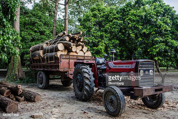 Poplar tree logs used for plywood manufacturing sit in a tractor trailer at a sawmill in Muzaffarpur Bihar India on Tuesday July 28 2015 India's...