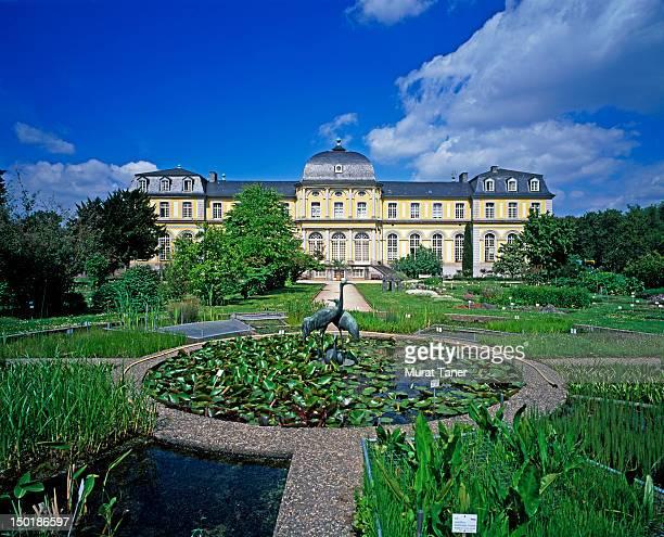 poppelsdorf palace and botanical gardens - botanischer garten stock-fotos und bilder