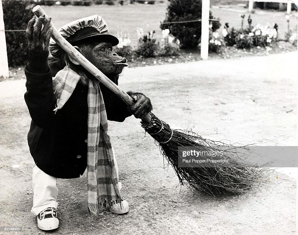 6, Humour, Ape cleaning up with brush, while dressed in a sweeper's clothes