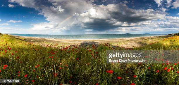 Poppies and rainbow by the sea