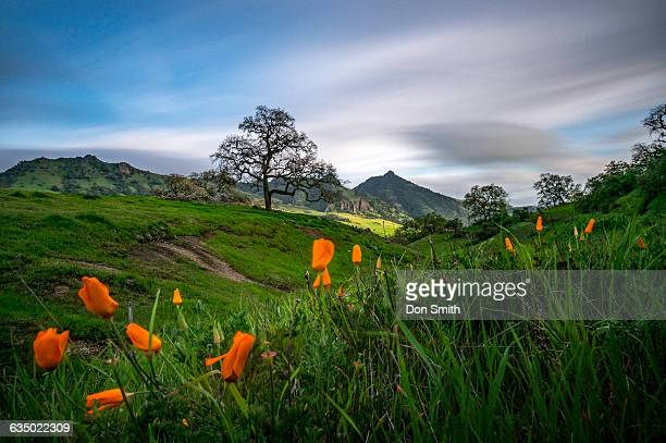 Poppies and Santa Ana Peak
