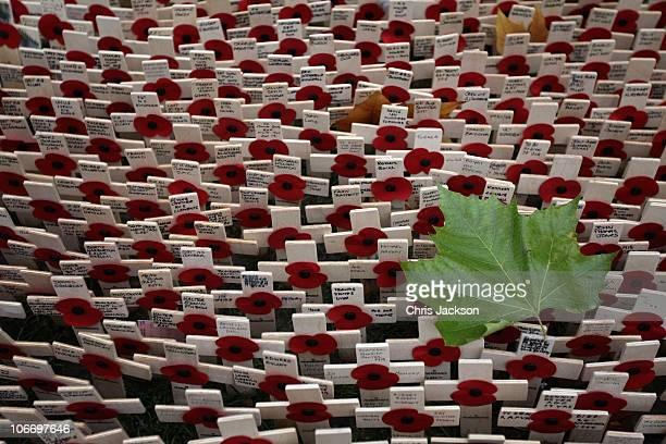 Poppies are covered by autumn leaves in front of Westminster Abbey in the Field of Remembrance on Armistice Day on November 11 2010 in London England...