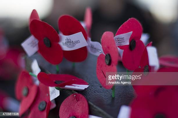 Poppies are displayed at the War Memorial for the 100th anniversary of the ANZAC landing at Gallipoli Turkey in World War One at the Auckland Museum...