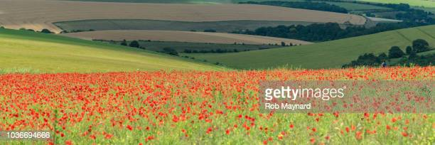 poppies at south downs - memorial day background stock pictures, royalty-free photos & images