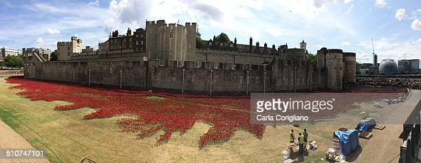 Poppies at Tower of London.