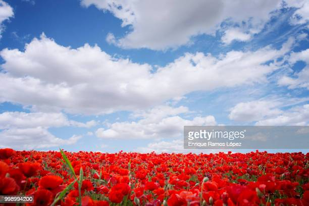 Poppies field and cloudy sky