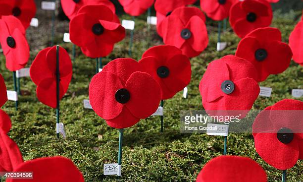 Poppies for Peace made by locals to commemorate Anzac Day adorn the Titirangi roundabout on April 20 2015 in Auckland New Zealand 2015 marks the...