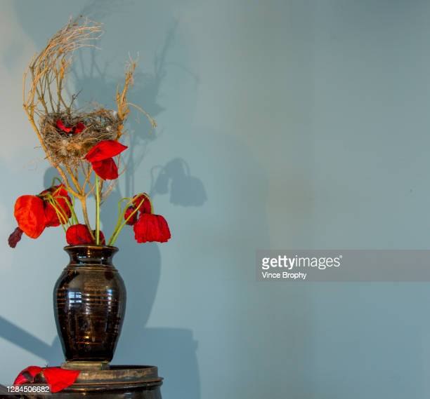 poppies for remembrance day to remember the wounded and fallen. - anzac day stock pictures, royalty-free photos & images
