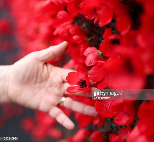 poppies for remembrance - anzac day stock pictures, royalty-free photos & images