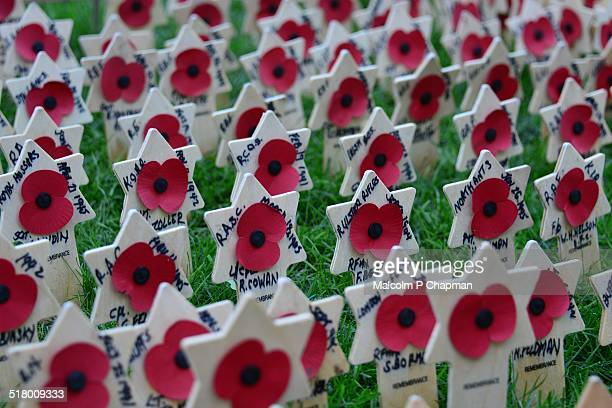 poppies, garden of remembrance, westminster abbey - remembrance sunday stock pictures, royalty-free photos & images