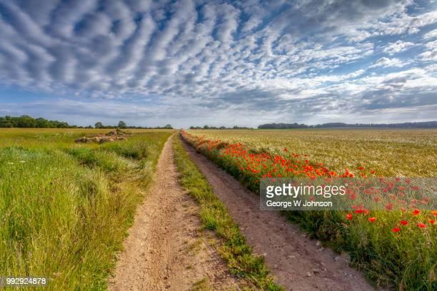 poppies iii - norfolk east anglia - fotografias e filmes do acervo