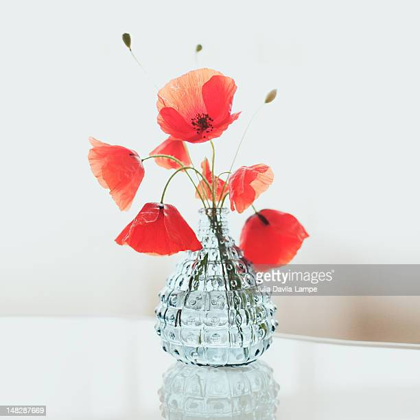 Poppies in transparent vase
