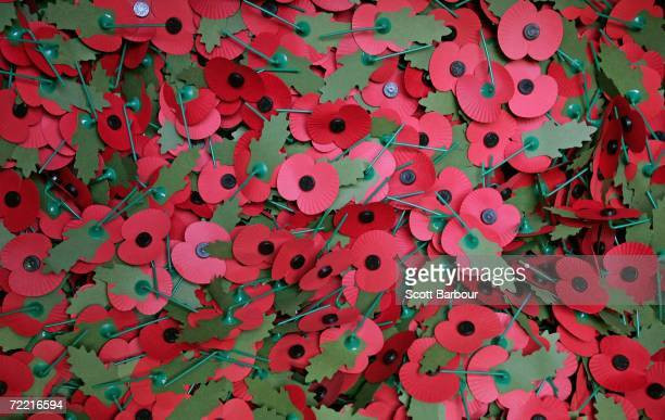 Poppies sit in a box ready to be distributed at The Royal British Legion Poppy Factory on October 19 2006 in London England The Poppy Factory will...