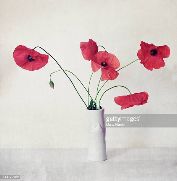 Poppies still-life