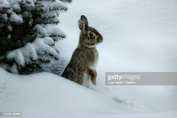 popping up to say hello - animals in the wild stock pictures, royalty-free photos & images