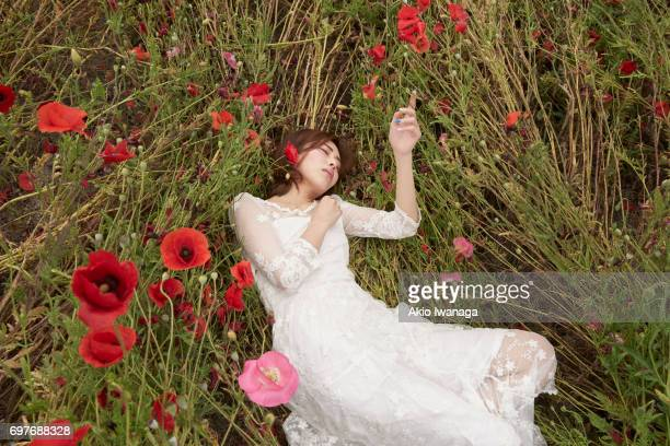 poppy and women - lace dress stock pictures, royalty-free photos & images