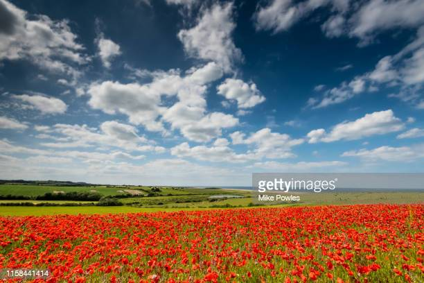 poppy field and cloudscape, north norfolk - sky stock pictures, royalty-free photos & images